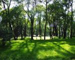 Парк в Кожухово